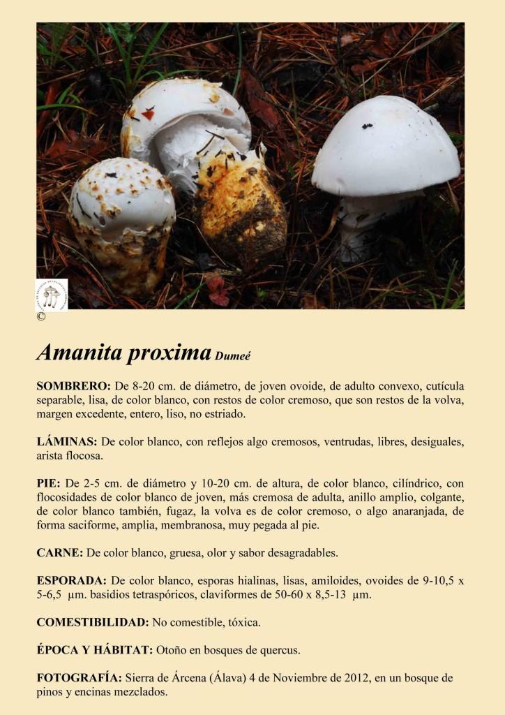 A. proxima