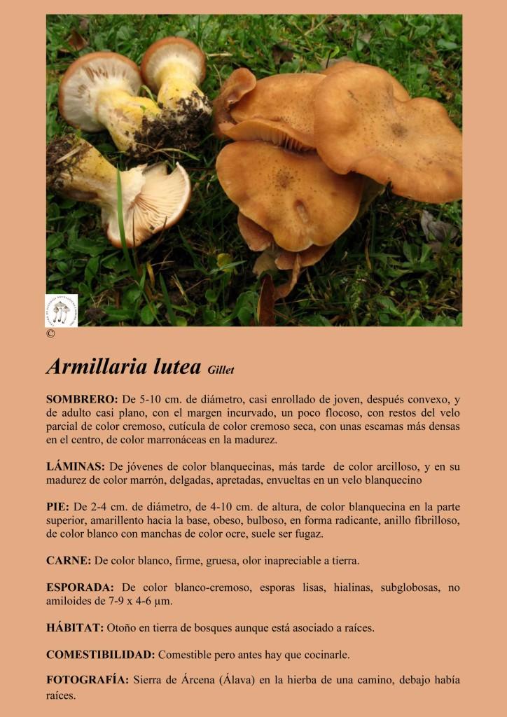 Armillaria lutea