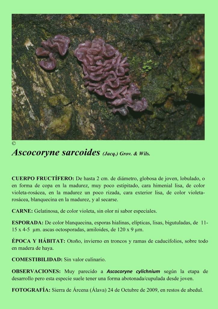 Ascocoryne sarcoides