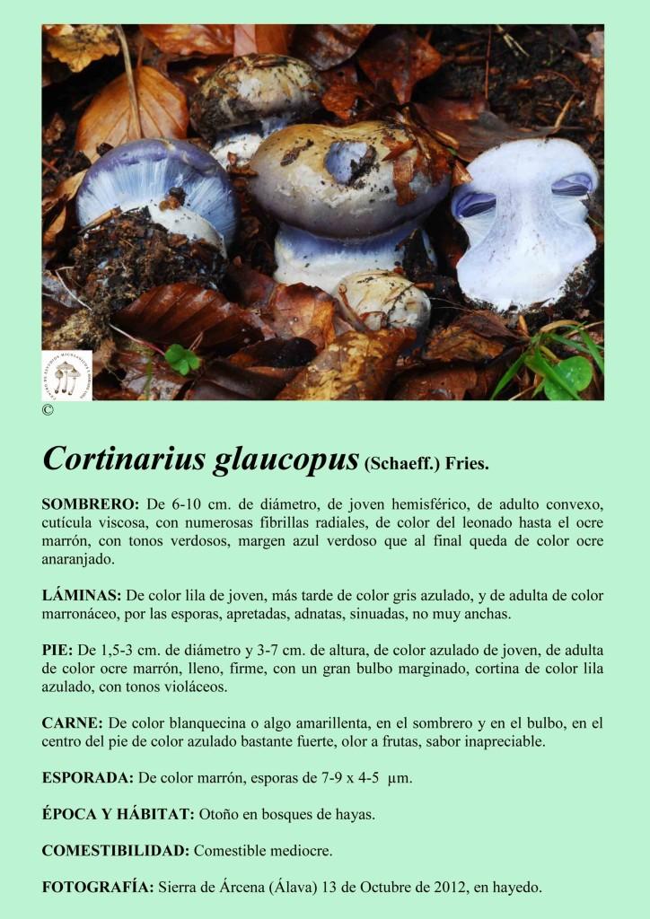 C-glaucopus