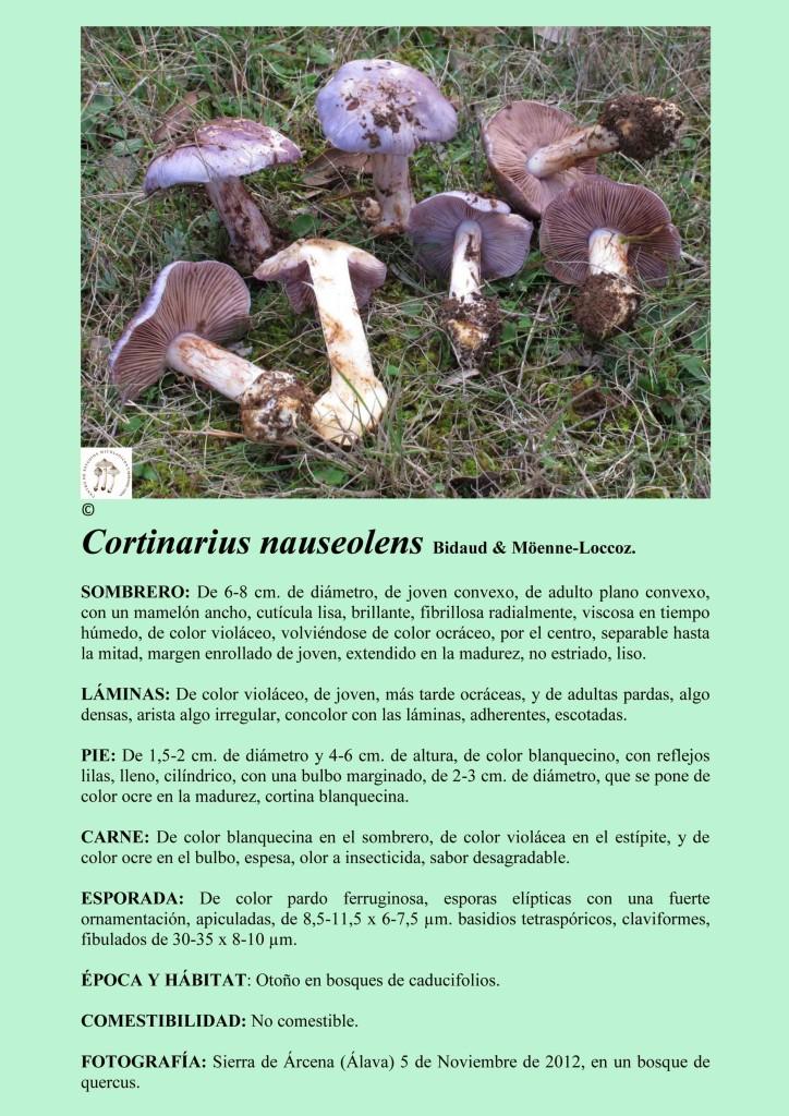 C. nauseolens