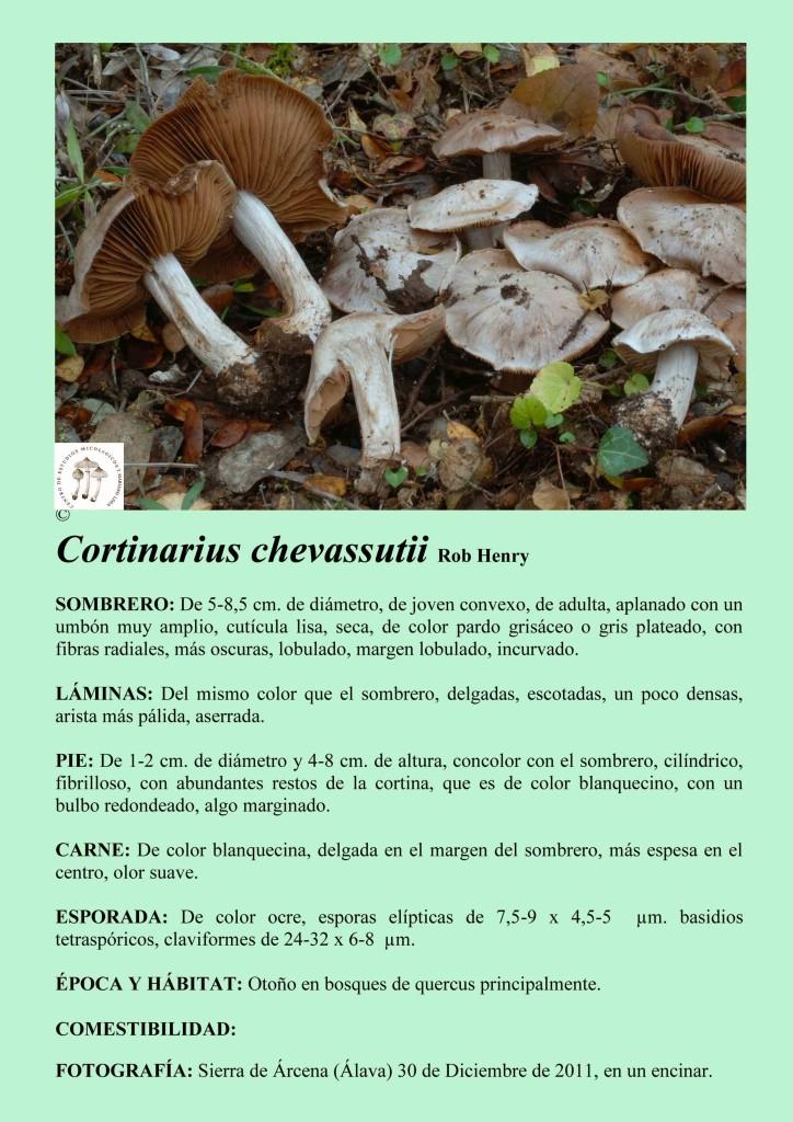 C..chevassutii