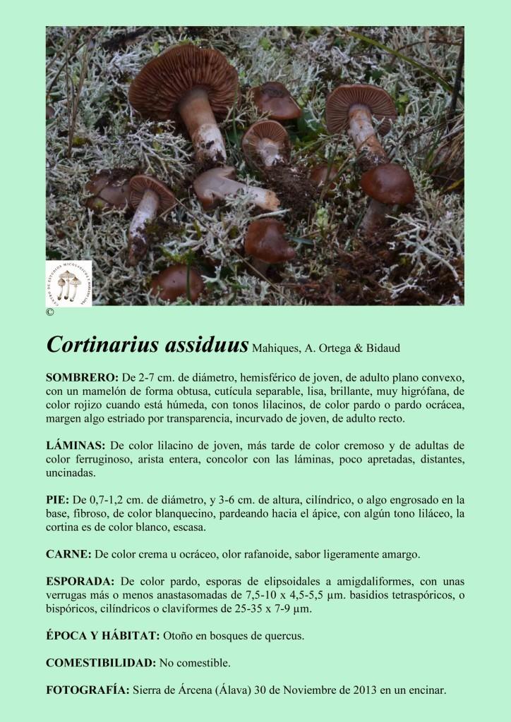 C.assiduus