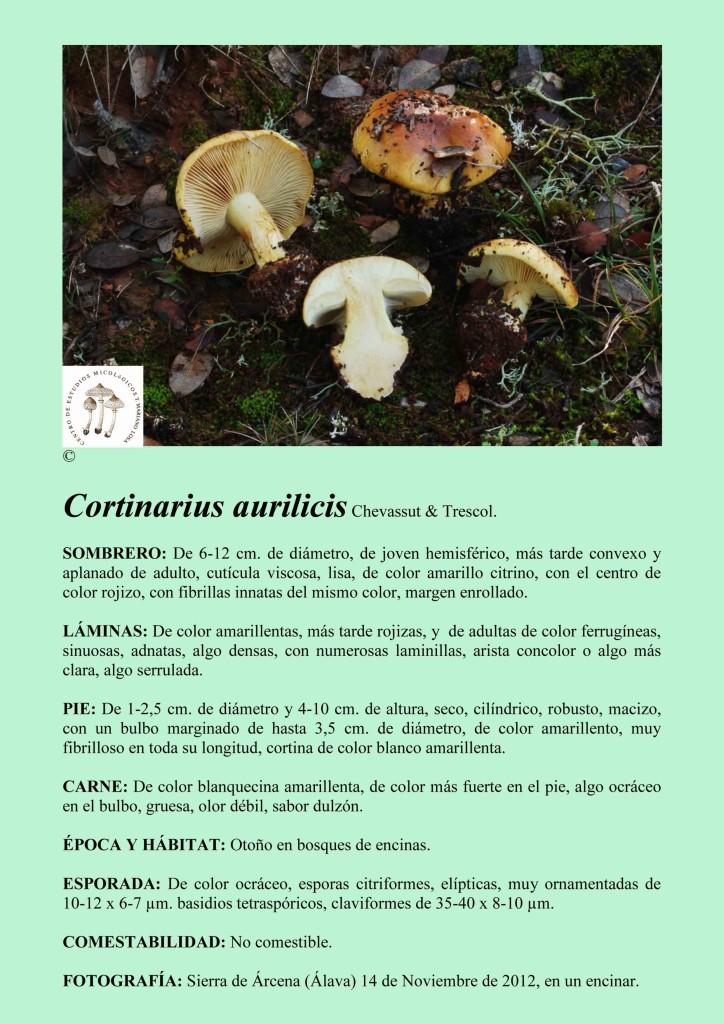 C.aurilicis