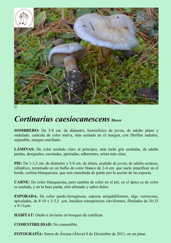 C.caesiocanescens