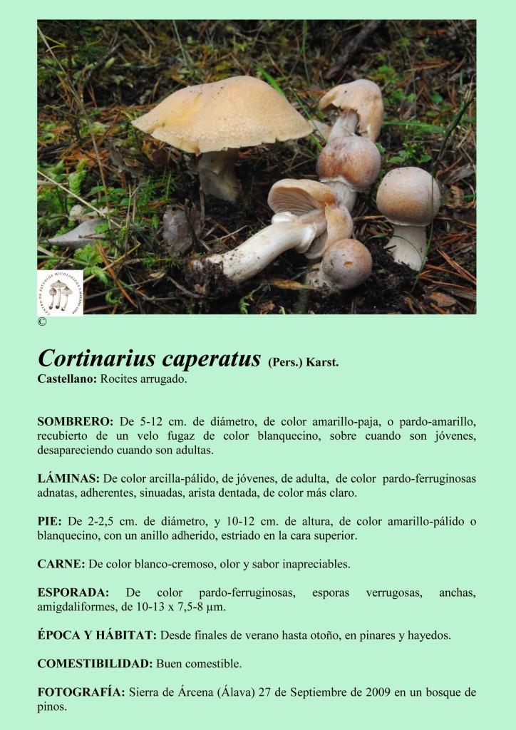 C.caperatus