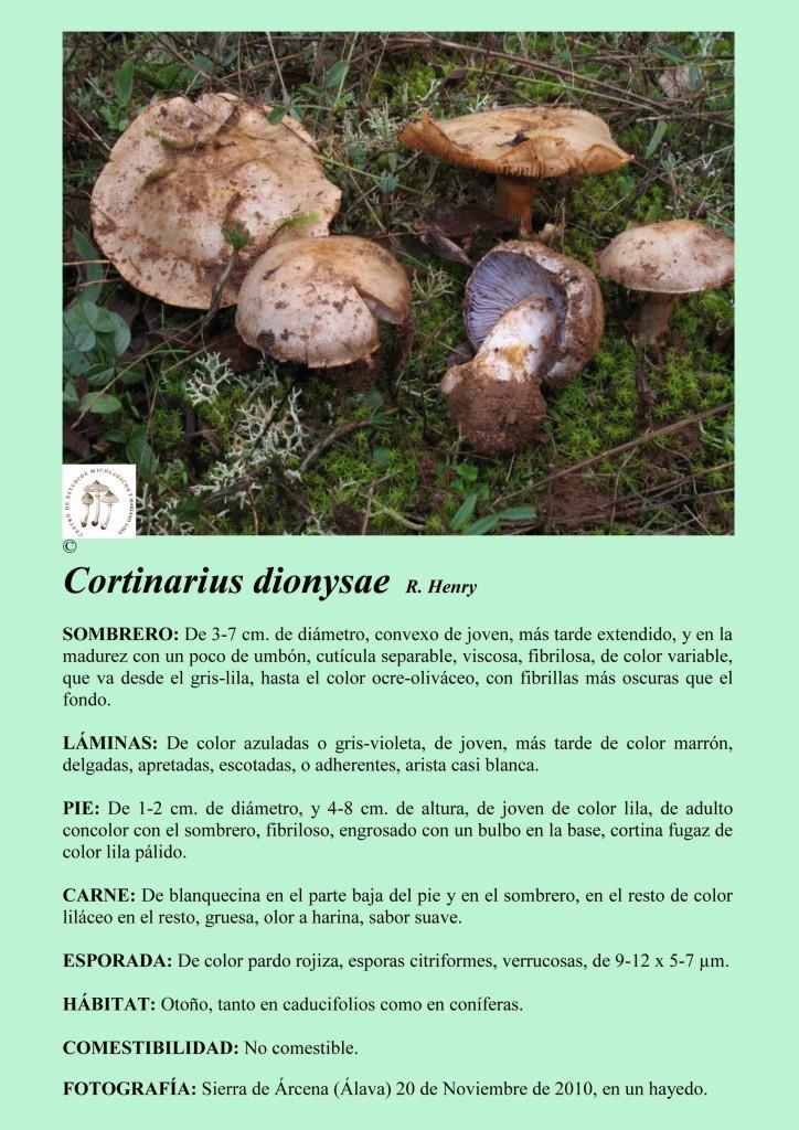 C.dionysae