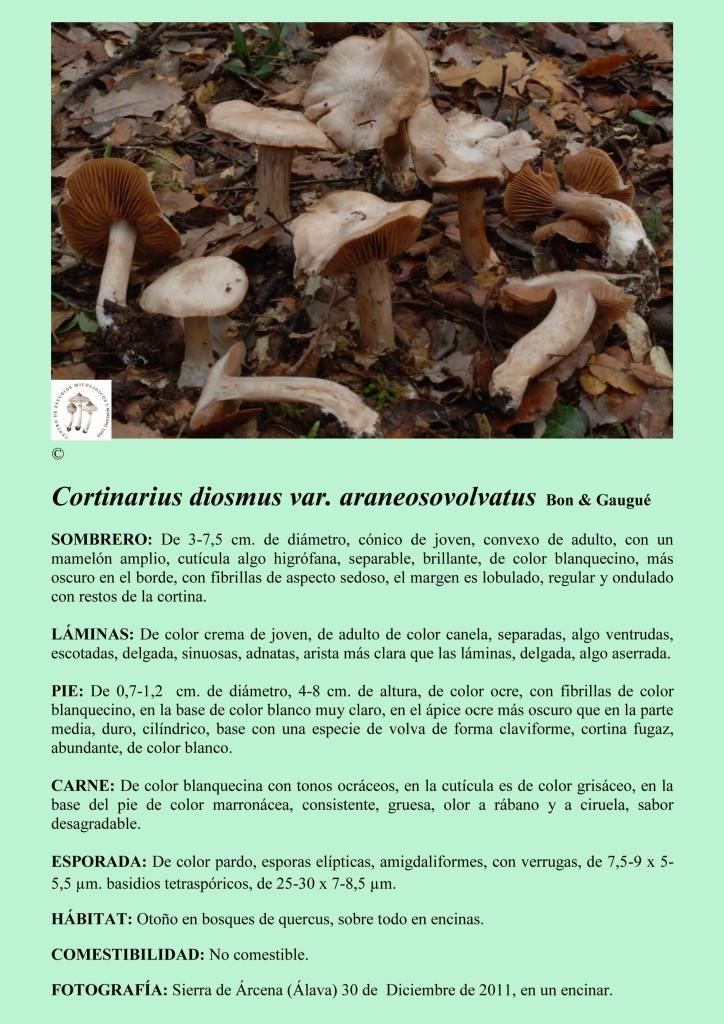 C.diosmus var,aran
