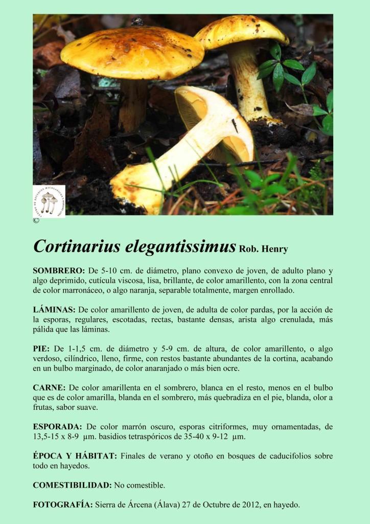 C.elegantissimus