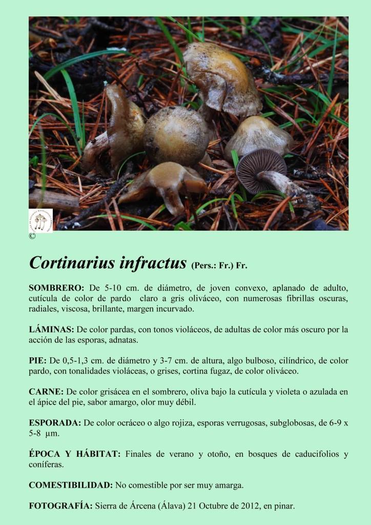 C.infractus