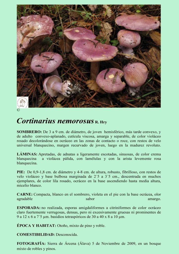 C.nemorosus