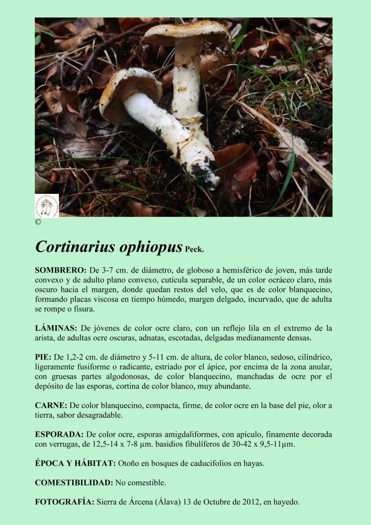 C.ophiophus