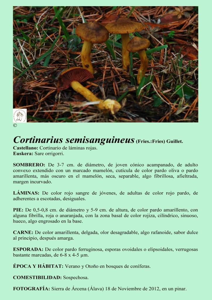 C.semisanguineus