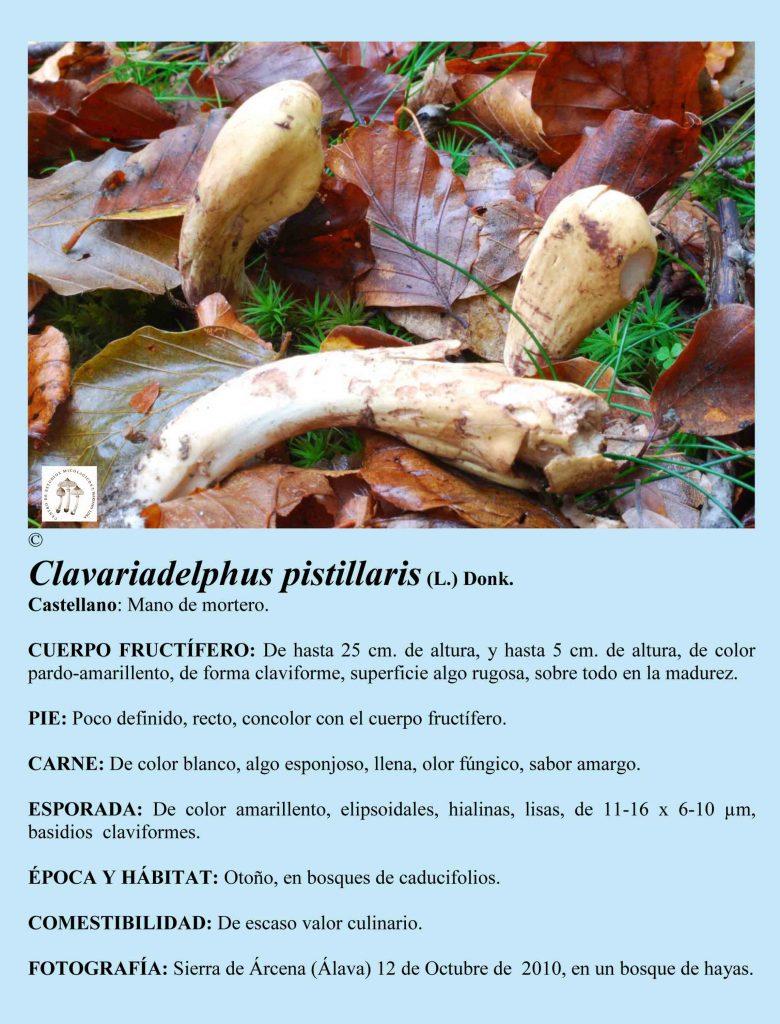 Clavara pistillaris