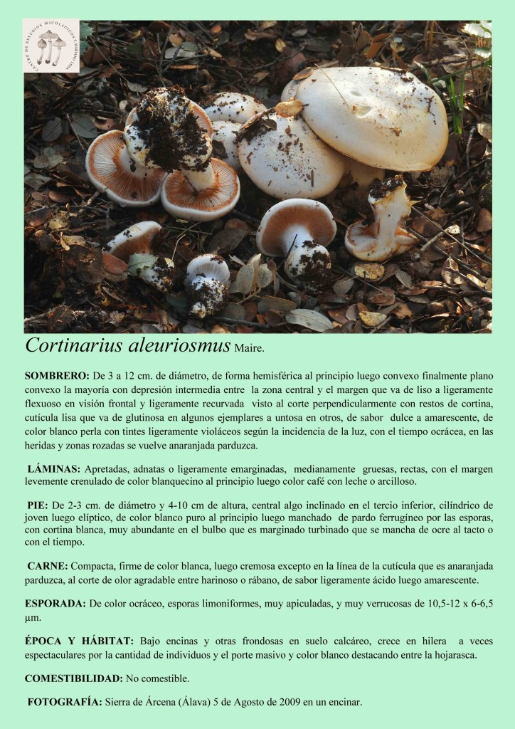 Cortinarius aleurismus
