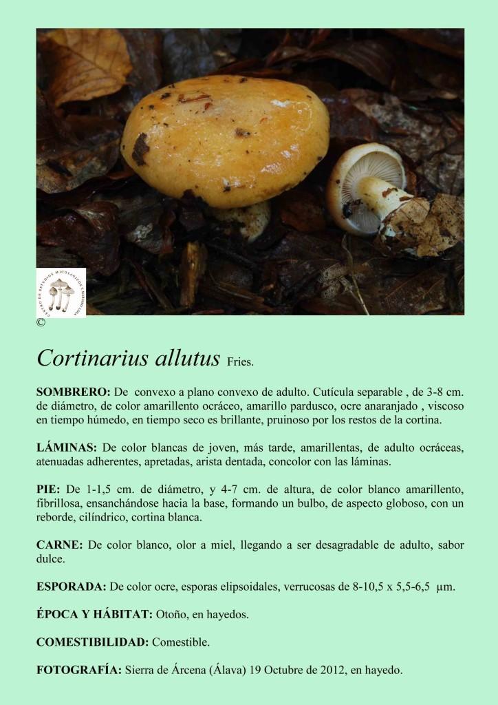 Cortinarius allutus