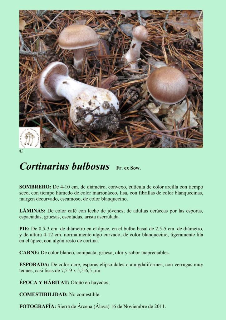 Cortinarius bulbosus