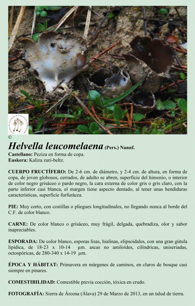 H. leucomelaena