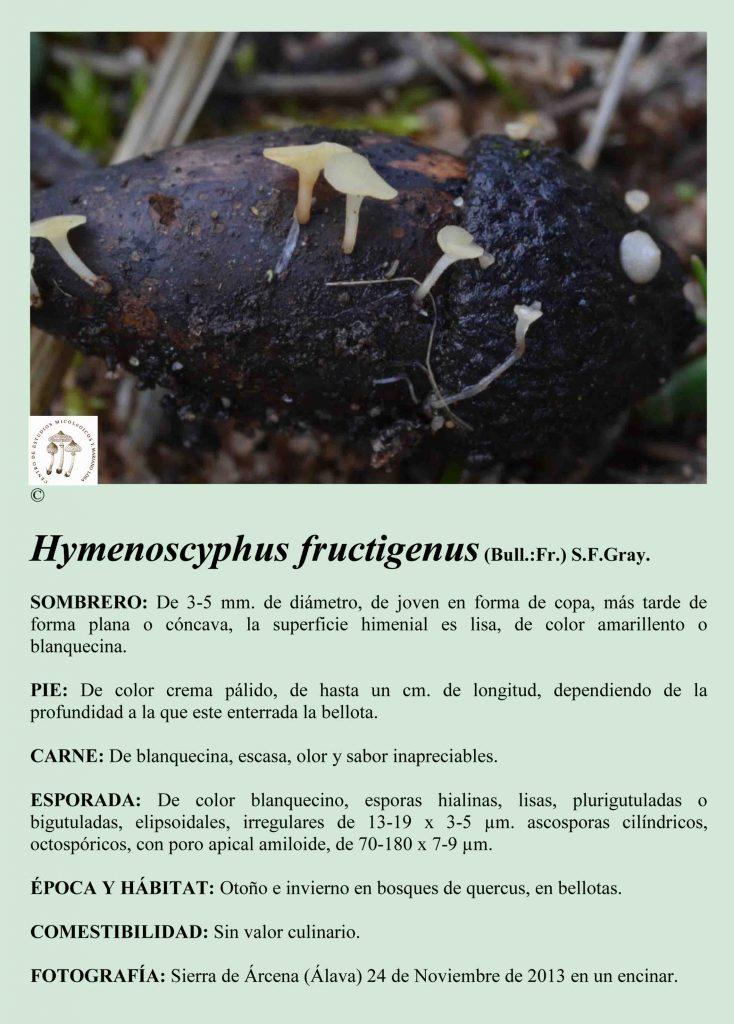 H.fructigenus