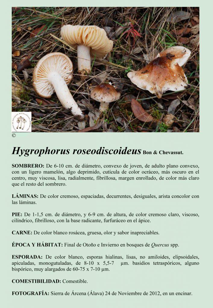 H.roseodiscoideus
