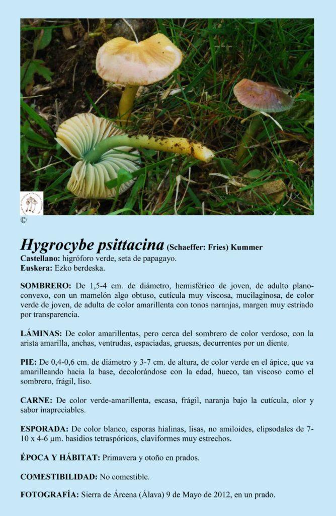 Hygrocybe psittacina