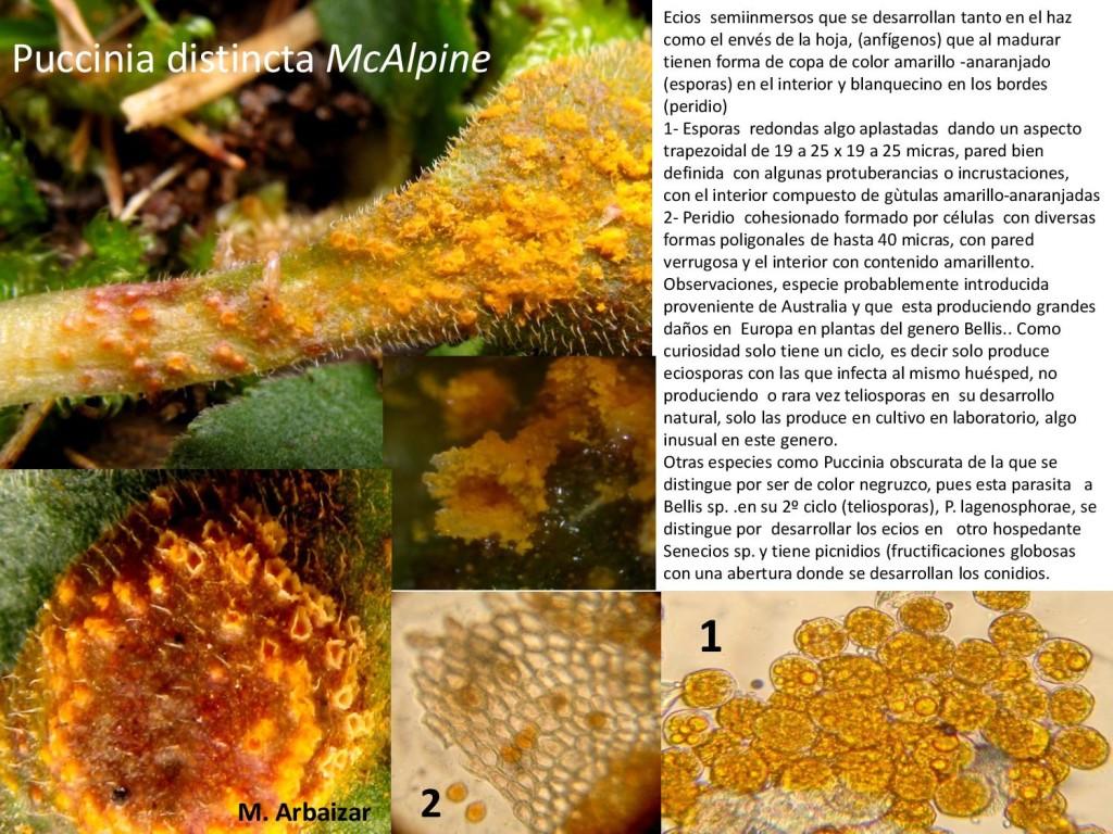 Puccinia distincta-page-001