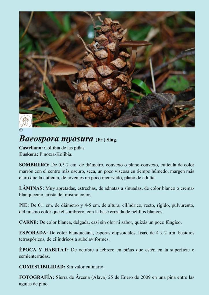 baeospora myoasura