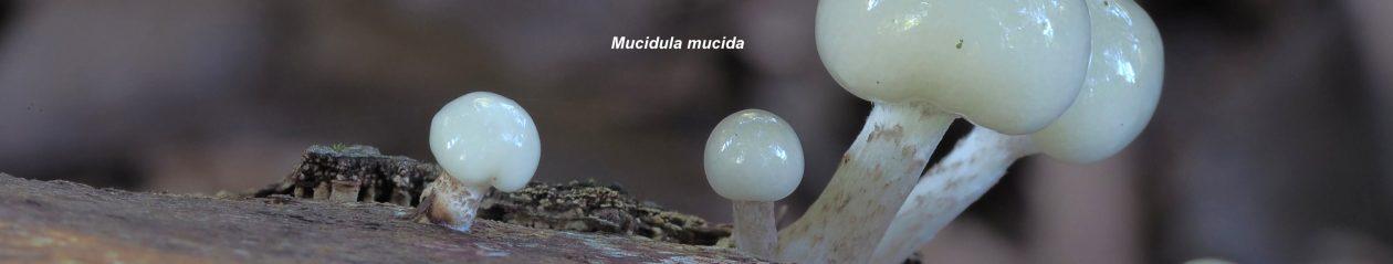 Centro de Estudios Micológicos T. Mariano Losa de Miranda de Ebro