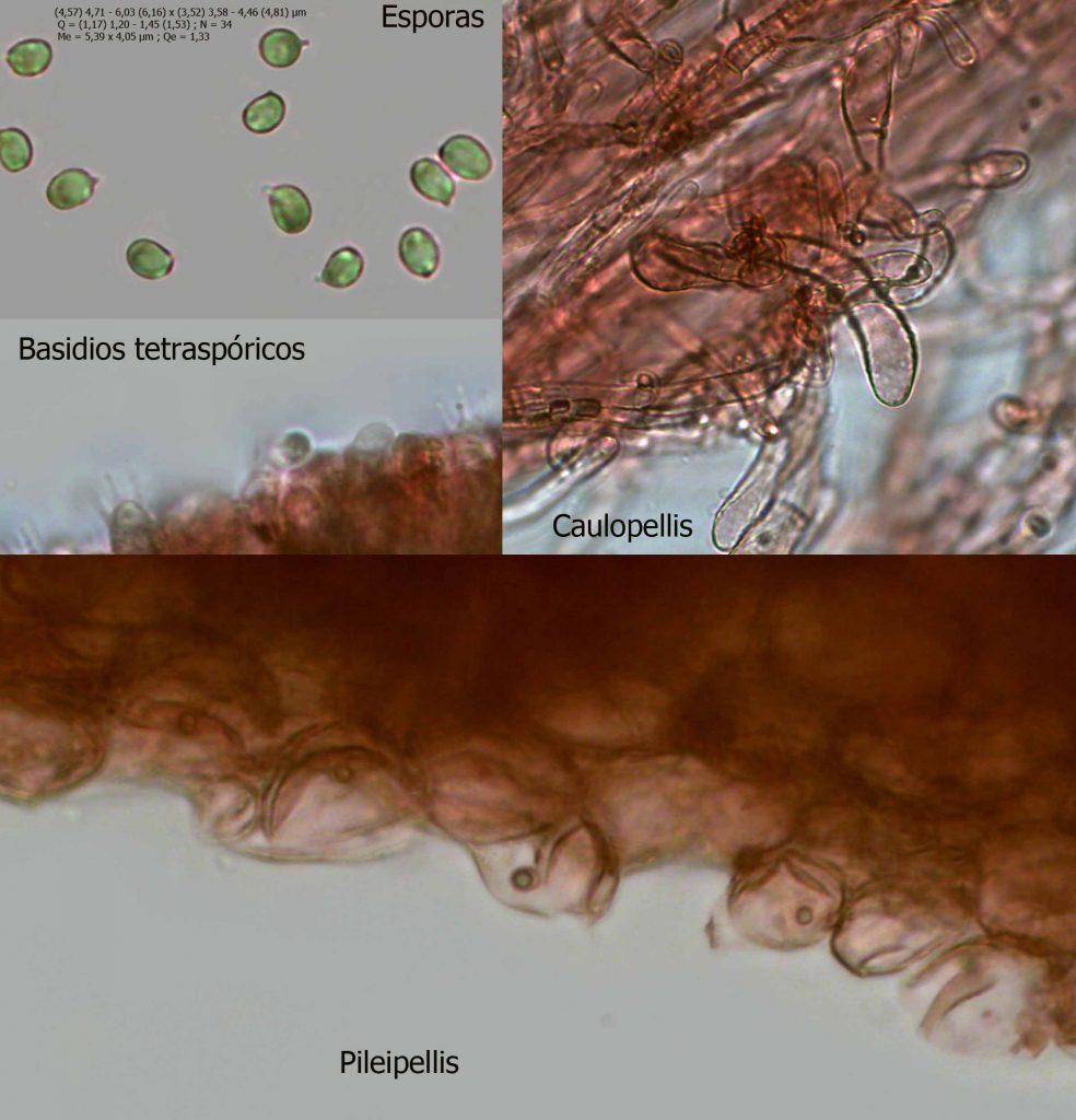 montaje dermoloma