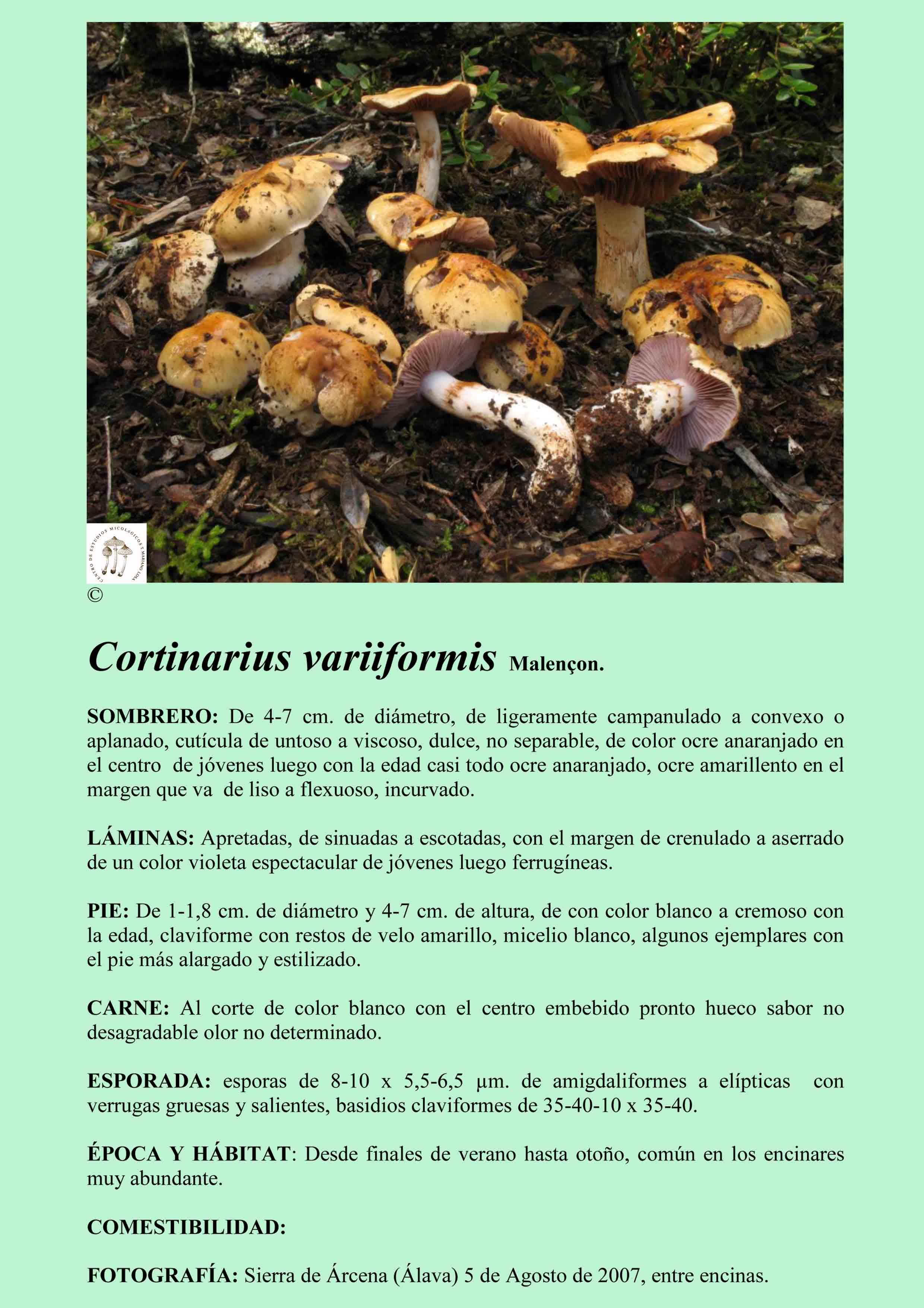 C.variiformis
