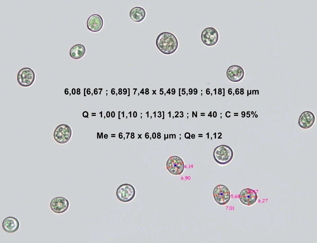 pluteussp107.pixi-001 (FILEminimizer)
